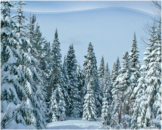 Snow Covered Fir Keynote Template